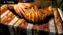 Красивые кошки планеты