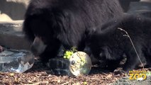 Animals Keep Cool at Brookfield Zoo  Adorable Kangaroo Joeys at Brookfield Zoo