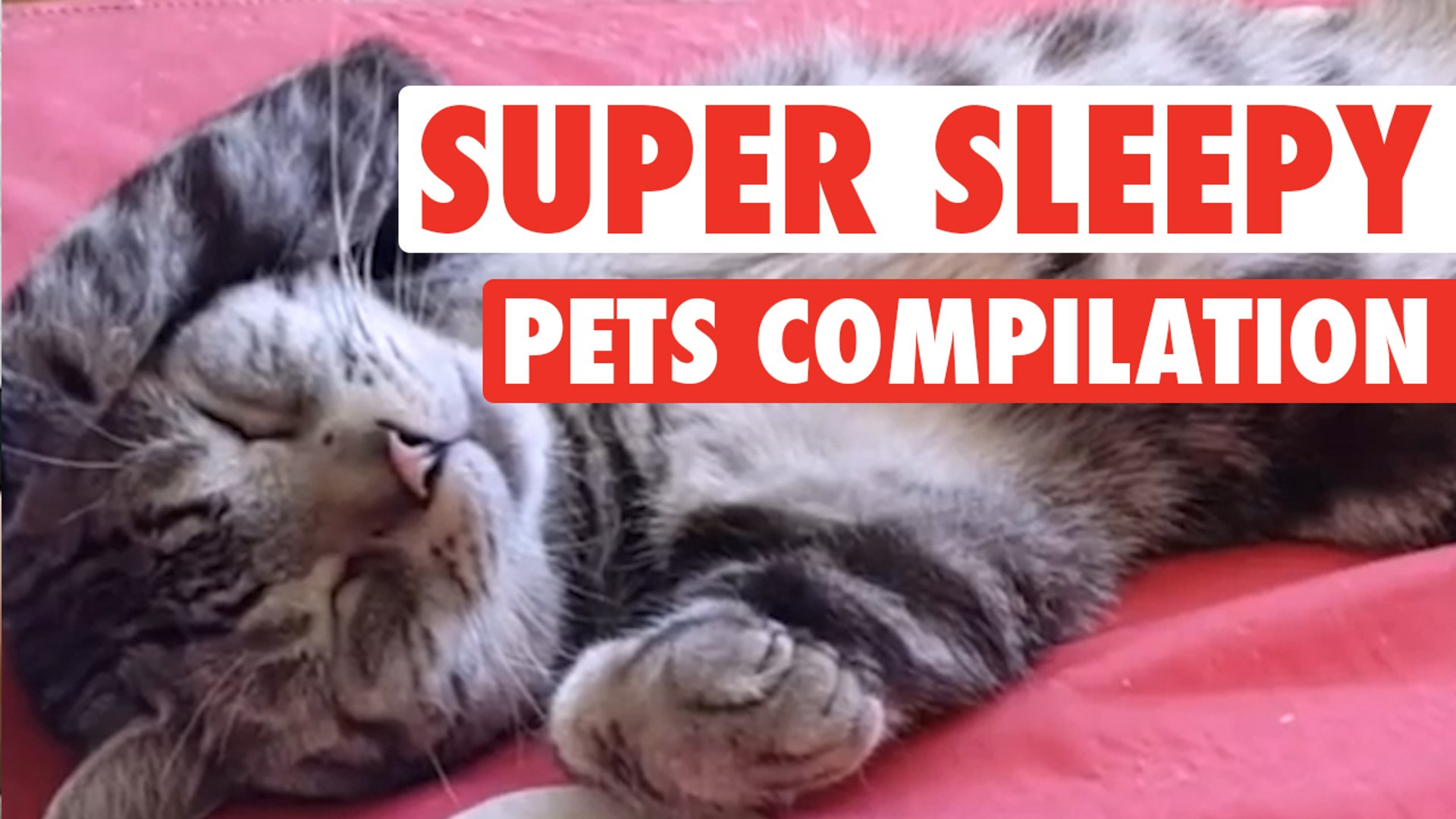 Super Sleepy Pets || Pets Sleeping Compilation