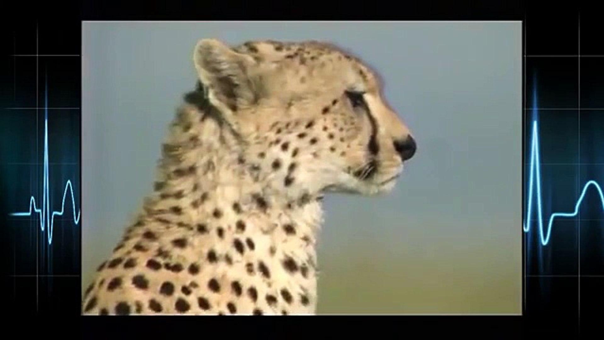 Leopard attacks Animals real life ☆ Animals Attack