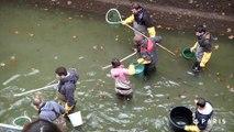 Mise à sec du canal Saint-Martin. Episode 3 : les poissons du Canal Saint Martin déménagent