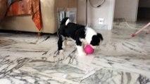 Lhoyd joue a la balle