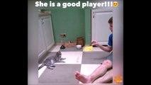 Les chats sont de très bons joueurs de tennis