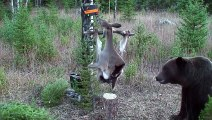 The brilliant reaction of a wild bear towards a scientific experiment! Simply genius!