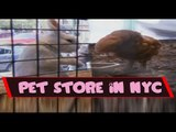 Banksy Street Art and Pet Store in NYC