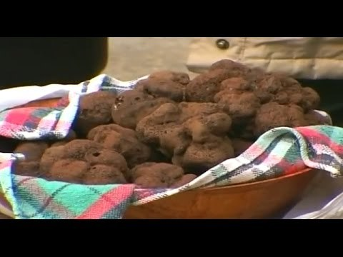 The Most Expensive Food In The World - Truffles