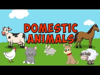 Learn - Domestic Animals - Kids Nursery Rhymes Educational Videos
