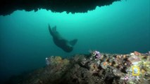 Filming Sea Lions | Americas National Parks
