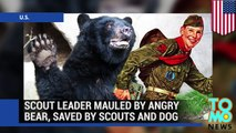 Bear mauls Boy Scout leader in New Jersey after bear cull kills 510 bears - TomoNews