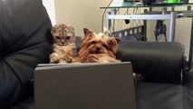 Cat and Dog Can not Take Their Eyes Off TV