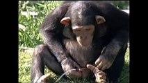 Monos divertidos Compilación de octubre de 2015 - Mono Nueva Divertido Videos