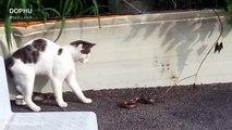 Cat vs Cobra Snake Attack ● Wild Animals Fight
