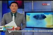 Ika 26 na élevés en captivité Phl Aigle, inaalagaan sa Phl Aigle Centre de sa Ville de Davao
