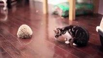 初めておさるの子猫はハリネズミを見て