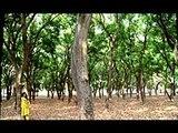 Jo Chaley Tou Jaan Se Guzar Gaye Ost full song top songs best songs new songs upcoming songs latest songs sad songs hindi songs bollywood songs punjabi songs movies songs trending songs mujra dance Hot songs