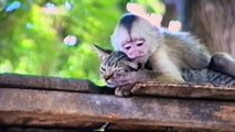 Funny Monkey Forcefully Kisses Adorable Cat