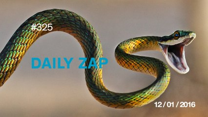 DAILY ZAP #325 : Kissing a snake is a bad idea !