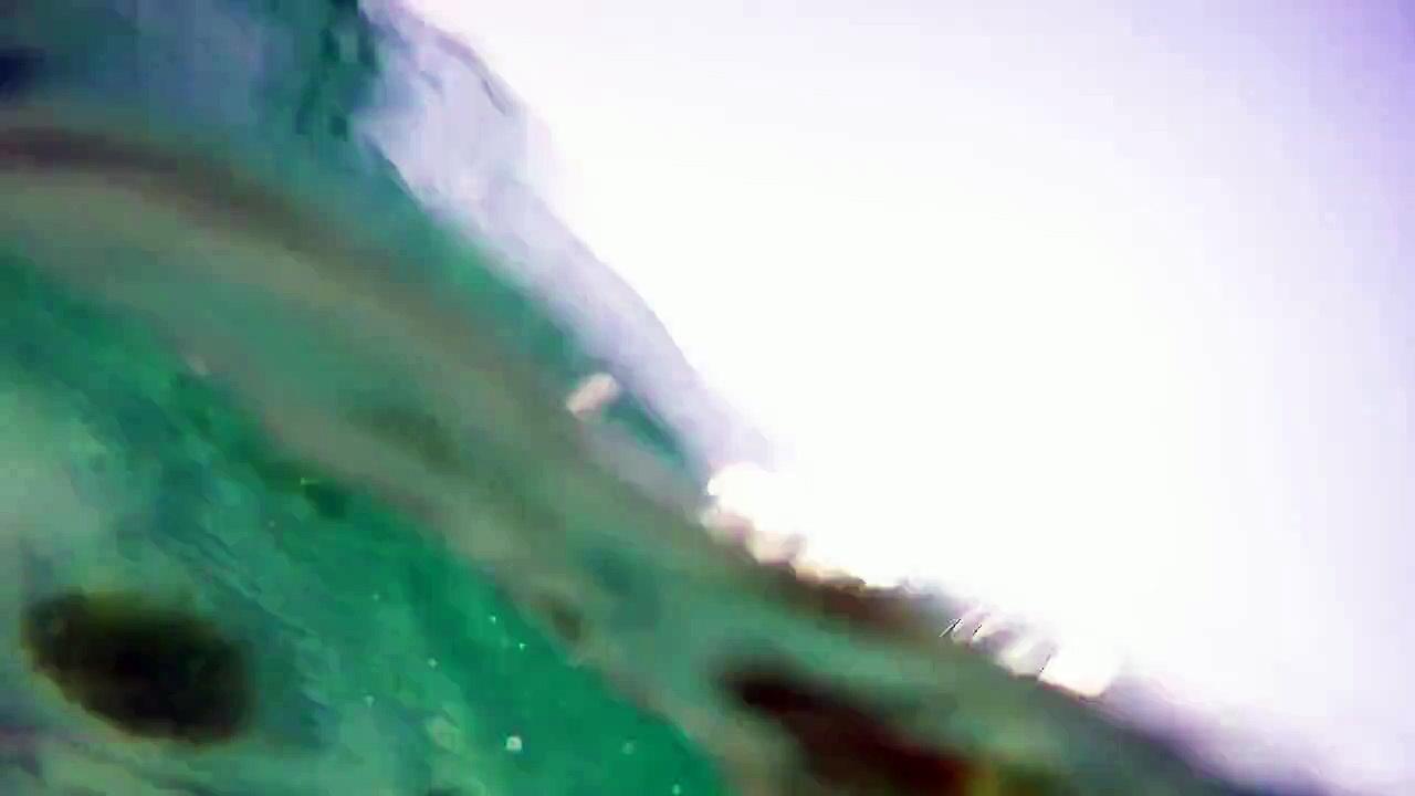 Swimming With A Wild Stingray In Destin, FL
