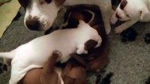 34ème vidéo Tout le monde ne dort pas pendant la nuit à STAFFORDLAND