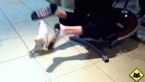 FUNNY VIDEOS_ Funny Cats - Funny Cat Videos - Funny Animals - Funny Fails - Cats Chasing Shadows