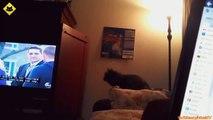 FUNNY VIDEOS_ Funny Cats - Funny Cat Videos - Funny Animals - Fail Compilation - Cats Fails