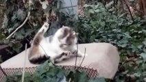 Urgent chaton cherche famille. - environ 5 mois . Il vit dehors.  Il s'appelle Maou