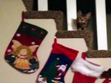 Cat Steals Christmas Stocking