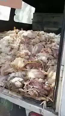 How the Chicken Shawarma is made of Dead chickens ll must wtach