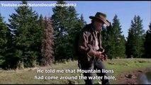 Nature Stallions documentary Cloud Challenge of the wild Stallions english subtitles