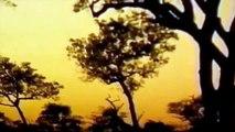 Lions Documentaries - Wildlife Lions of Africa Classic Documentaries full