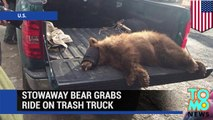 Sleeping bear: Stowaway bear travels 65 miles in trash truck to Fresno dump site - TomoNews