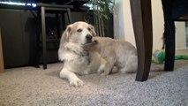 Une séance de câlins intense entre un chat et un chien
