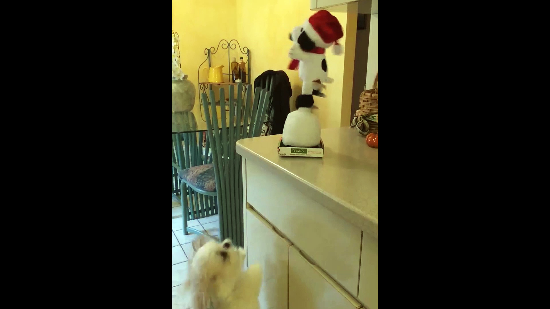 Dog Dancing with Toy Dog