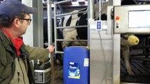 Genech : la traite des vaches entre dans l'ère 2.0 à l'Institut