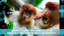 10 Very Weird Looking Animals