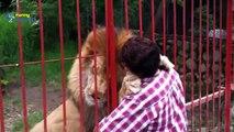 Sevimli Hayvan Videoları Derleme 2015 En Iyi Kedi Videoları 720P Hd