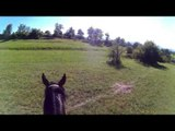 Funny Horses,Ostern  Filly 5,Funny Animals,Pferde Video,Foal,Baby horse,Cavalli,말,chevaux