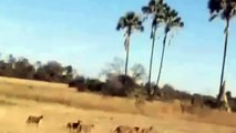 watch Lions Documentary by National Geographic - African Lions