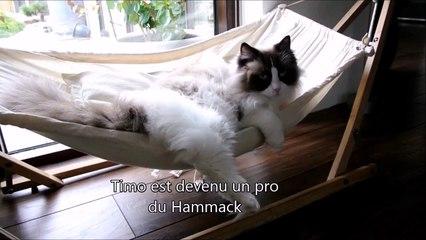 Un Chat Apprend à Monter Dans Son Hamac Sur Orange Vidéos