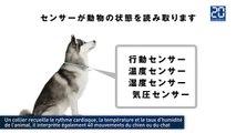 Comprendre son chien et son chat avec son smartphone : L'invention qui vient du Japon
