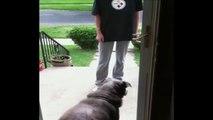 """Ce chien attend qu""""on lui ouvre la porte.. qui est dejà ouverte..."""