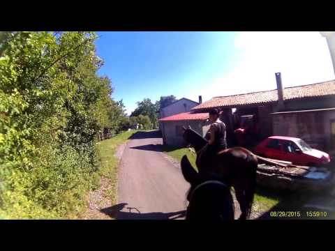 Funny Horse Videos 2015   Top Funny Horses Video Full   Funny Horse Compilation