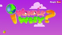 Why Are There Seven Days In A Week I Wonder Why Amazing & Interesting Fun Facts Video For