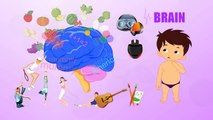 Brain Human Body Parts Pre School Know Your Body Animated Videos For Kids