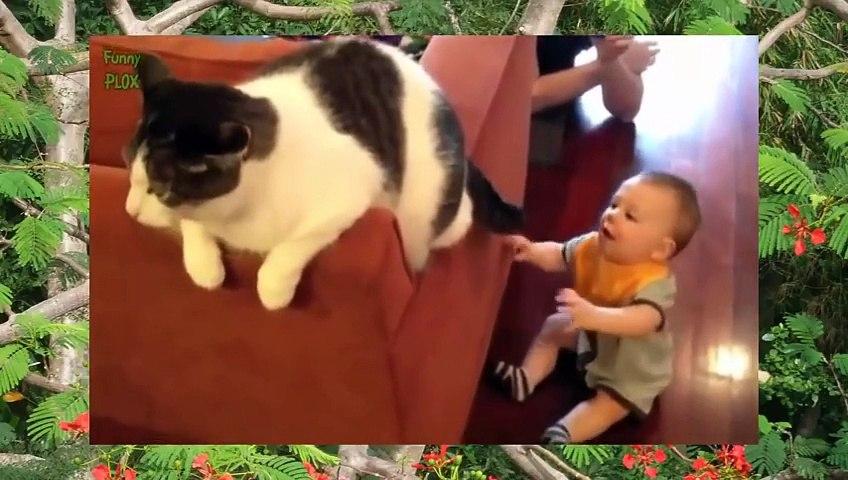 Clip hài hước nhất thế giới cười bể bụng về trẻ em | Godialy.com