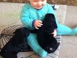 Deux chiots font des bisous à un bébé