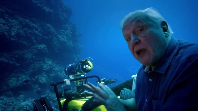 Face to face with sharks - Great Barrier Reef with David Attenborough: Episode 2 Preview - BBC One