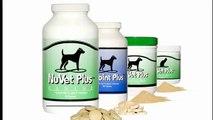 NuVet Plus Ingredient Series_ Benefits of L Methionine For Dogs