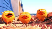 Pigeons - Cute animation cartoon