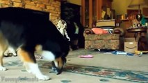 Dogs Adopts and Protects Abandoned Kittens - Funny Animals Channel